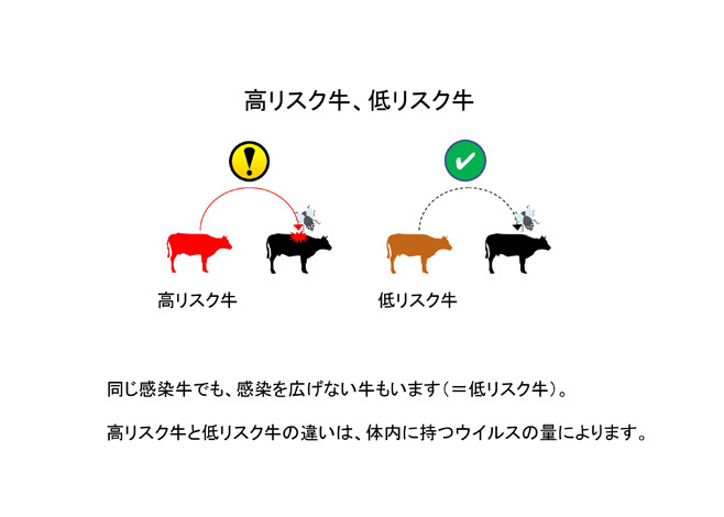 高リスク牛と低リスク牛--牛白血病ウイルス遺伝子検査--