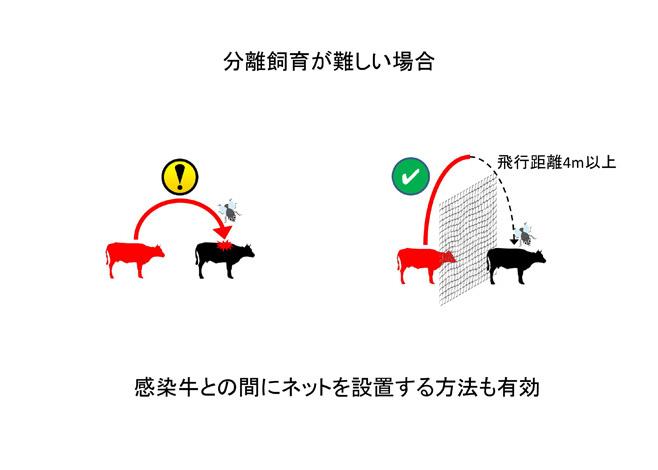 間にネットを設置--牛白血病ウイルス遺伝子検査--