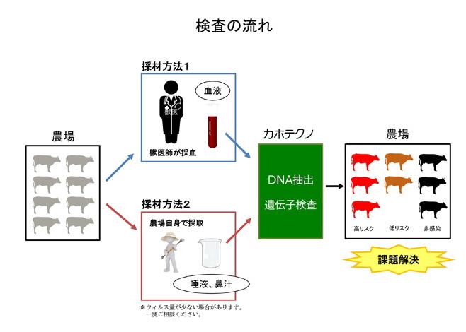 検査の流れ--牛白血病ウイルス遺伝子検査--